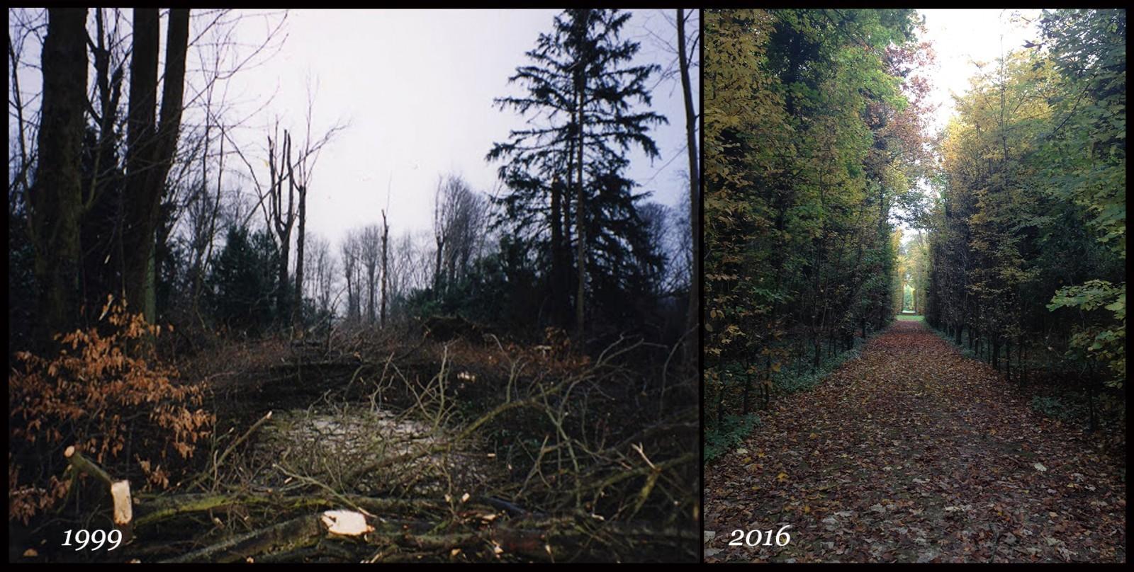 Régénération forestière des bosquets de Champs-sur-Marne détruits par la tempête du 26 décembre 1999. © JM Sainsard